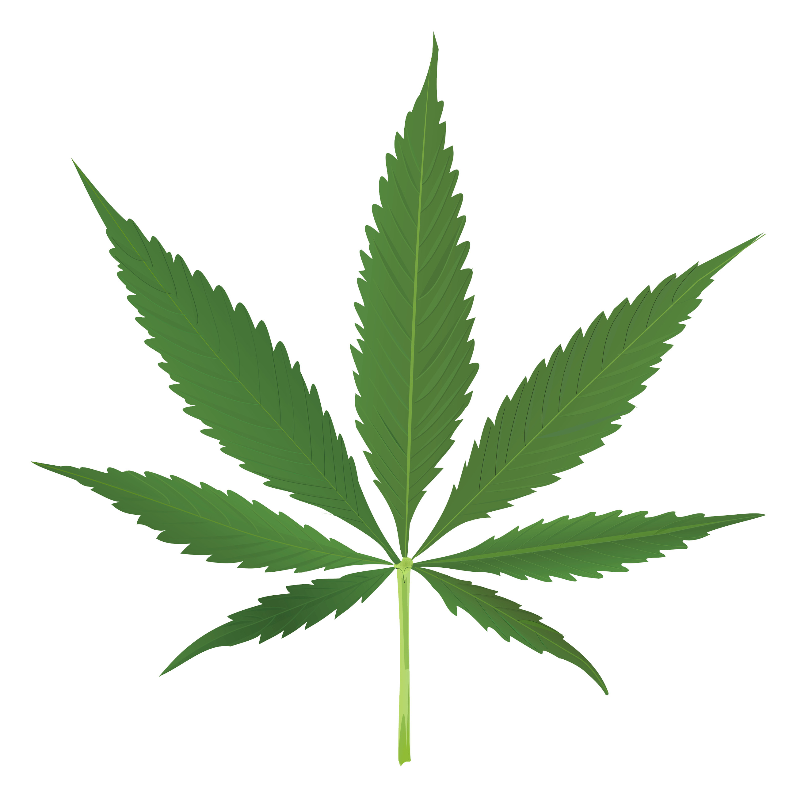 Cannabis Leaf Transparent Background - Weed Png | Free download best Weed Png on ClipArtMag.com