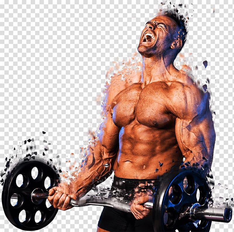 Weight Lifting Png Hd - Weight training Muscle Bodybuilding Barbell Lean body mass, chest ...