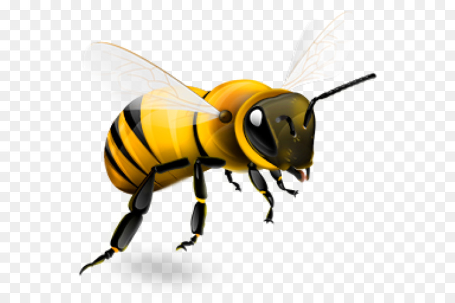 Bee Png Transparent - Western honey bee Insect Beehive - bee