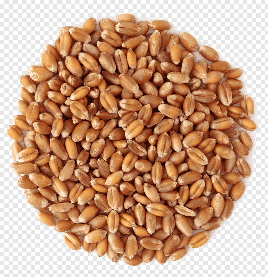 Dinkel Wheat Png - Wheat middlings Grain Cereal, Wheat PNG | PNGWave