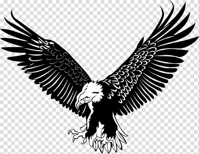 White And Black Eagle Stencil Bald Eagl 2407836 Png Images Pngio
