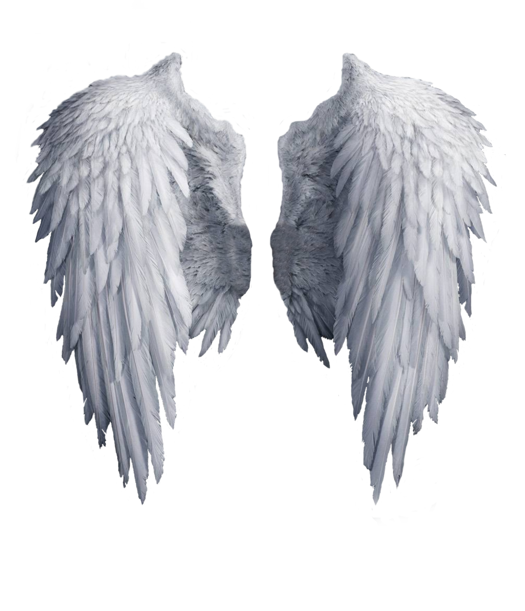 Wing Images Png Transparent 1789