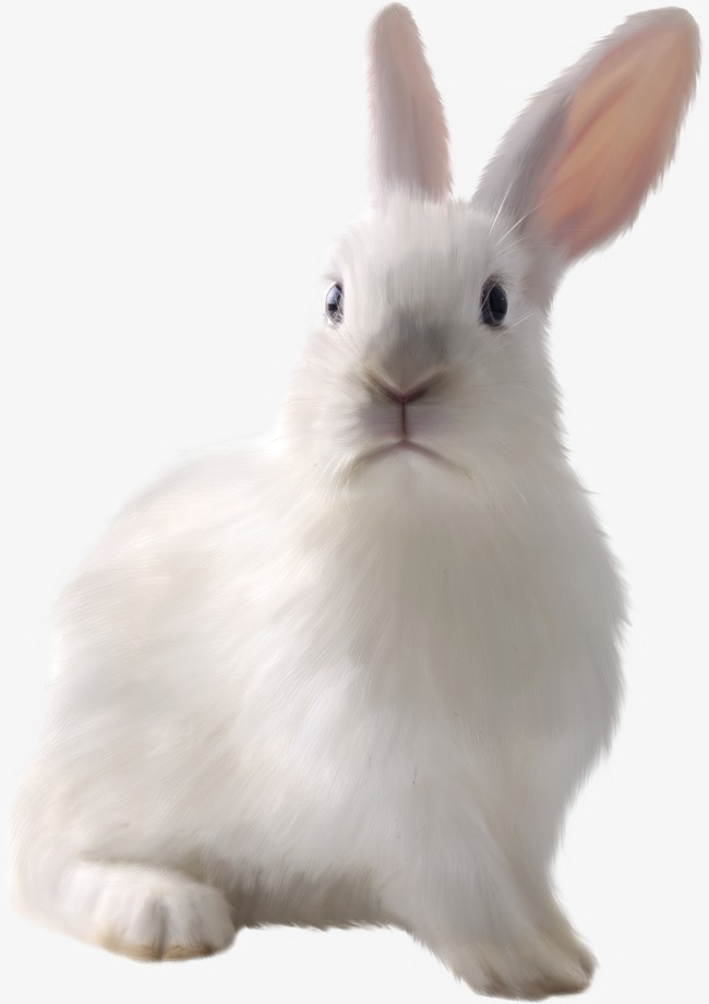 White Rabbit Png - White Cute Bunny, Cute Clipart, Bunny Clipart, White Rabbit PNG ...