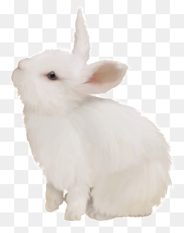 Rabbit Png - white cute bunny, White Rabbit, Cute Bunny, Rabbit PNG Image and Clipart