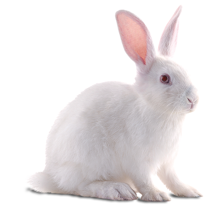 White Rabbit Png - White sweet rabbit png #40321 - Free Icons and PNG Backgrounds