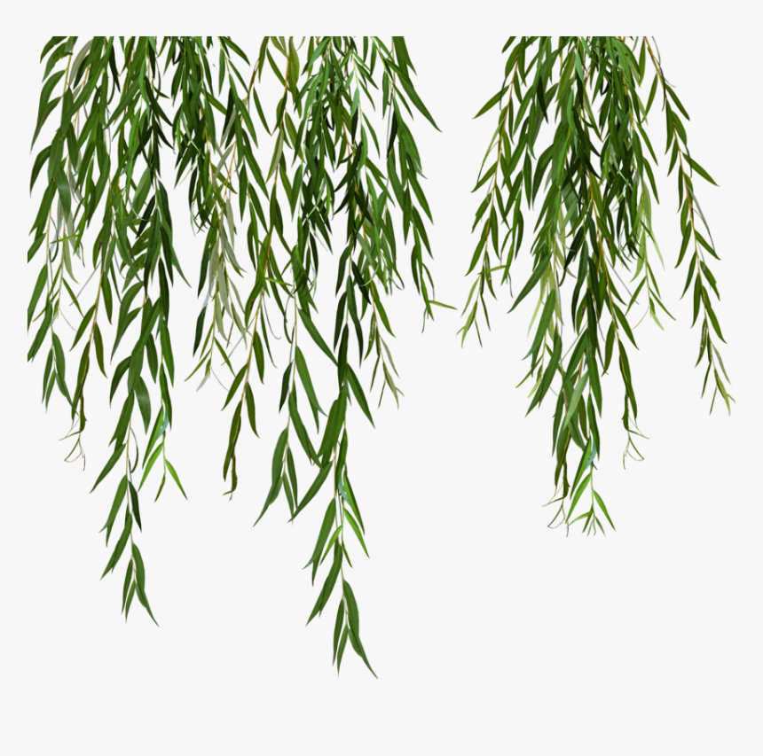 Weeping Willow Tree Black And White Png - Willow Svg Black And White Stock - Weeping Willow Tree Png ...
