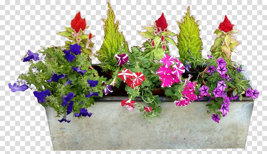 Window Box Png - Window, Garden, Flower, transparent png image & clipart free download