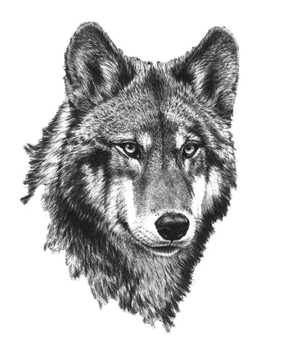 Black And White Png Wolf & Free Black And White Wolf.png ...