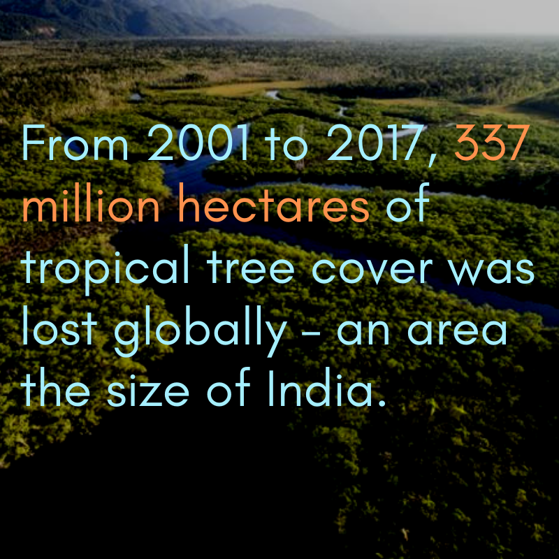 """Tropical Plant 21 Png - World Bank on Twitter: """"Today is #IntlForestDay! Let's commit to ..."""