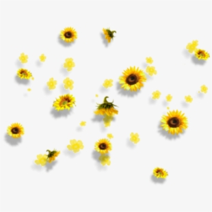 Fall Sunflower Png - yellow #flowers #aesthetic #tumblr #falling - Aesthetic ...