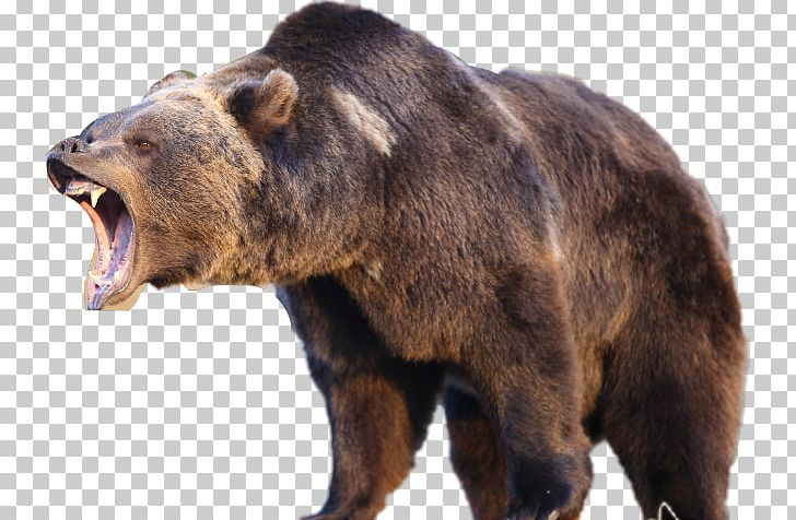 Bear Attack Png Free Bear Attack Png Transparent Images 94945 Pngio Care bears illustration, harmony bear care bears funshine bear, bear, purple, mammal, animals png. bear attack png transparent